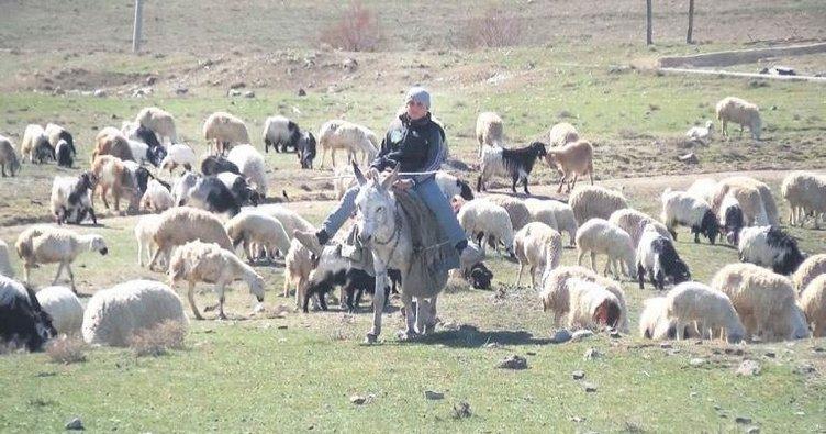 Küçük çobanlar Çoban Fuarı'na katılacak