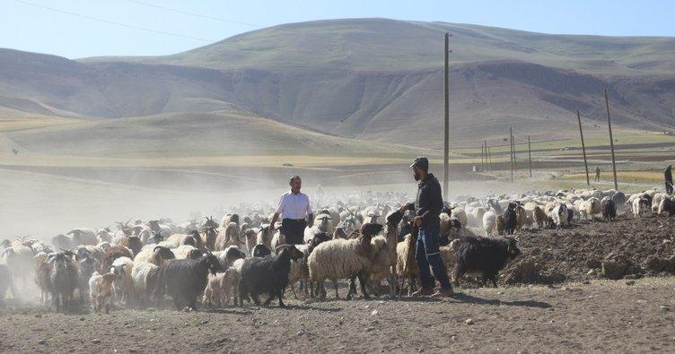 Aldığı destek ile 30 koyunu 300'e çıkardı