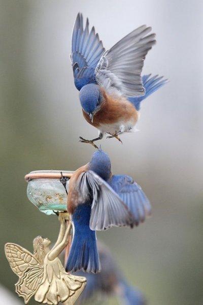 Doğanın en güzel renklerine sahip kuşlar