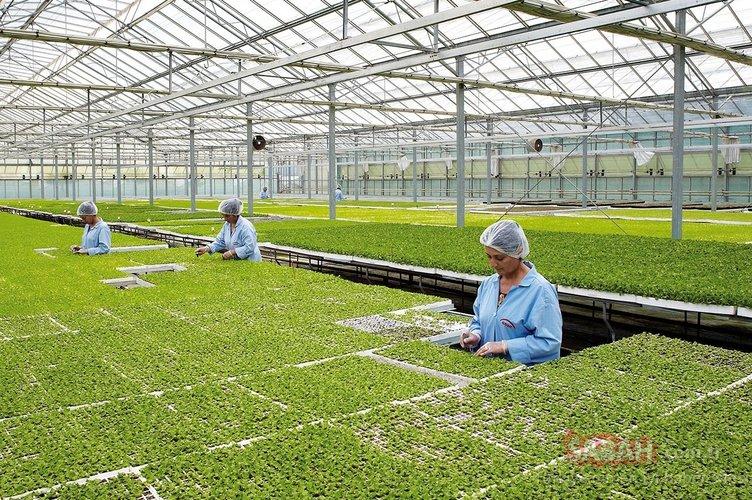 Sebze ve meyve fiyatları için kritik adım! 20 bin dönüme kurulacak...