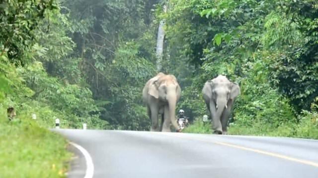 Yavru filden şaşırtan hareket!