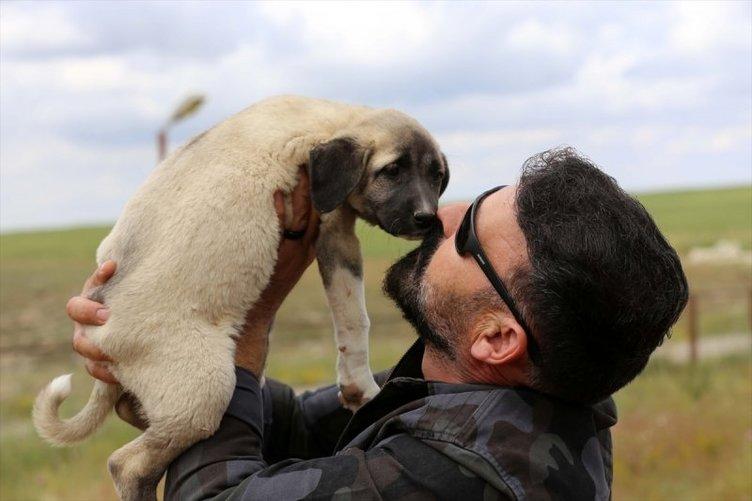Kangal köpeklerine ilgi arttı