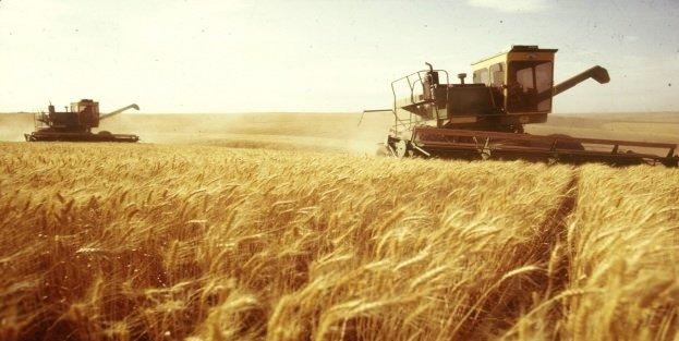 Buğdayın tarladan sofraya zahmetli yolculuğu