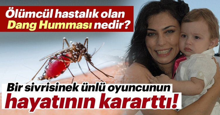 Dang humması nedir? Dang humması nasıl bulaşır? Dang humması hastalığına sebep olan Dangue virüsü nedir?