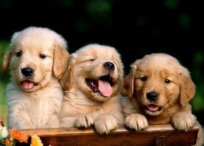 Köpekler için Facebook kuruluyor