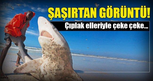 Dev köpekbalığını balıkçılar kurtardı
