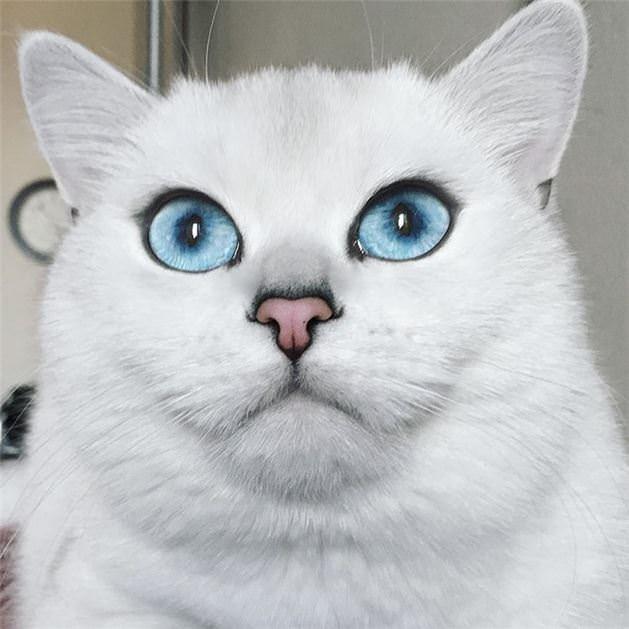 Dünyanın en güzel gözlü kedisi