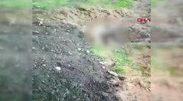Hatay'da zehir enjekte edilen köpeğin kan donduran ölüm anı görüntüleri sosyal medyada olay oldu!