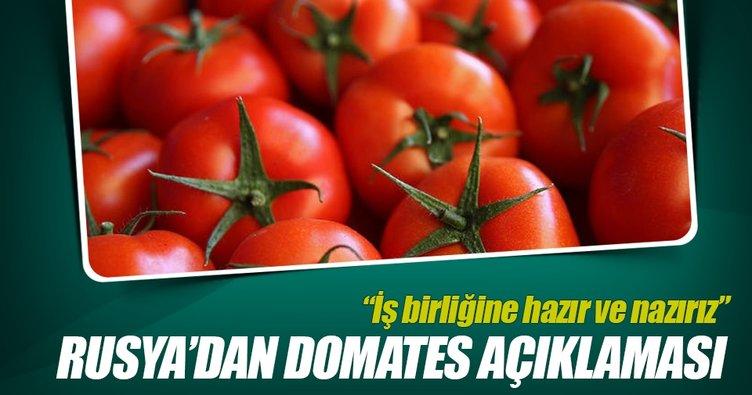 """Rusya Tarım Bakan Yardımcısından """"domates"""" açıklaması"""