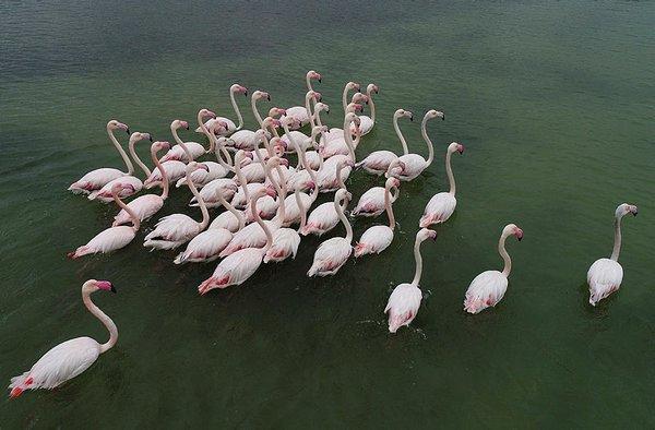 Çukurova göçmen kuşları ağırlıyor