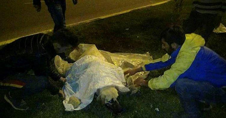 Gaziantep'te başından vurulan 2 köpek öldü