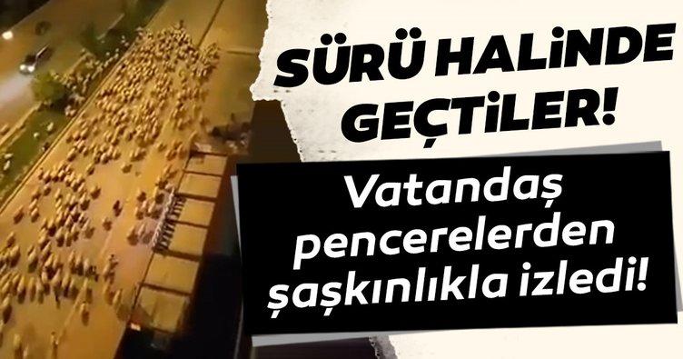 Samsun'da sokaklar koyunlara kaldı