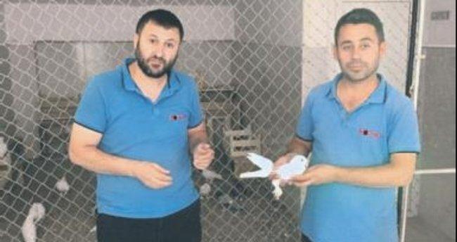 Yaralı güvercin kurtarıldı