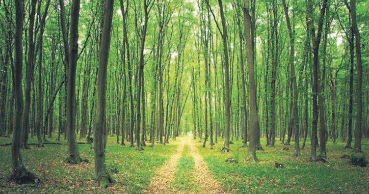 20 yılda 440 milyon ağaç dikecekler