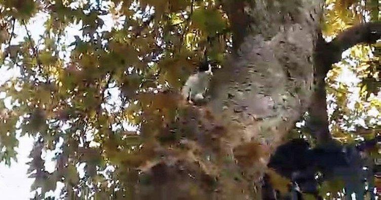 Gaziantep'te ağaçta mahsur kalan kediyi itfaiye kurtardı