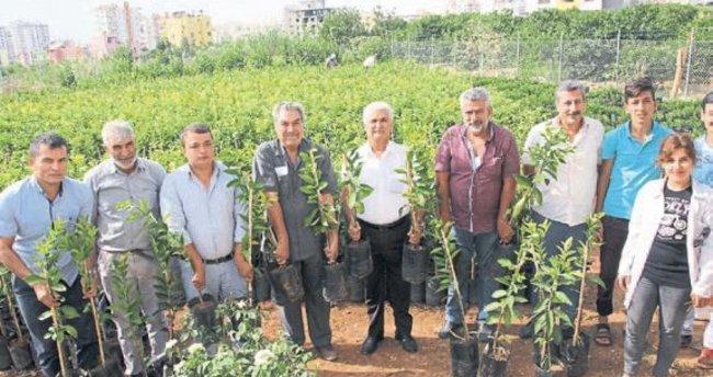 Sertifikalı fidanlara çiftçiden büyük ilgi