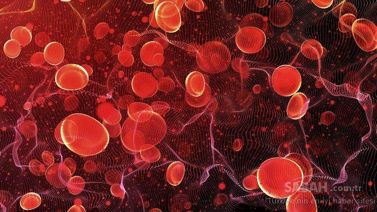 B12 vitamini deposu mucize besin...