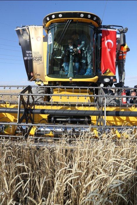 Başkan Erdoğan  Geleneksel Hasat Bayramı kapsamında buğday hasadı yaptı