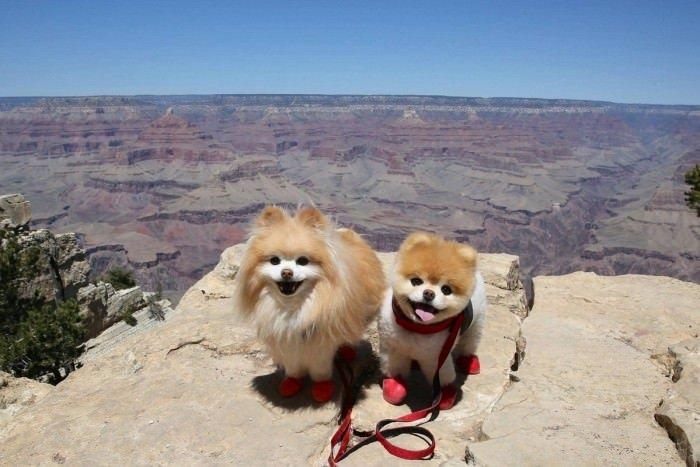 Bu köpekler çok pahalı!