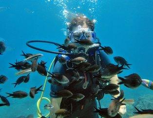 'Balık hafızası' miti yıkıldı