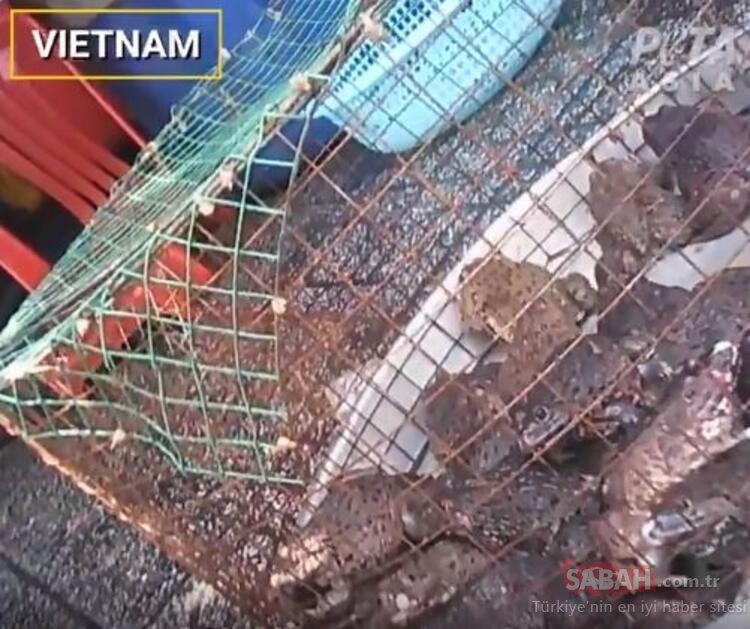SON DAKİKA: Şoke eden görüntüler! Hayvan pazarlarında gizli çekim yaptılar