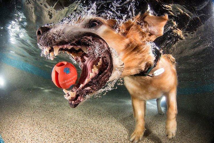 Su altındaki köpekler