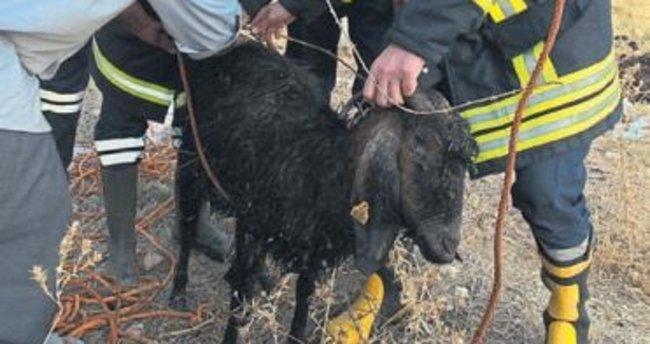 Keçilerin imdadına itfaiye erleri yetişti