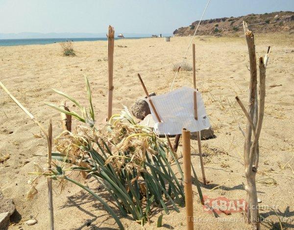 Balıkesir Ayvalık'taki son zambakları mahalle sakinleri böyle koruyor
