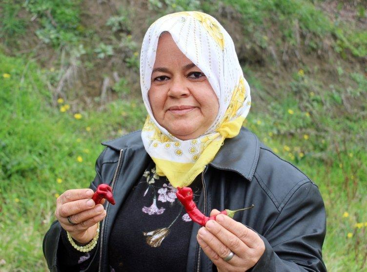 Hatay'daki kadın çiftçi gözlerine inanamadı! Ektiği biberleri görünce çok fena korktu!