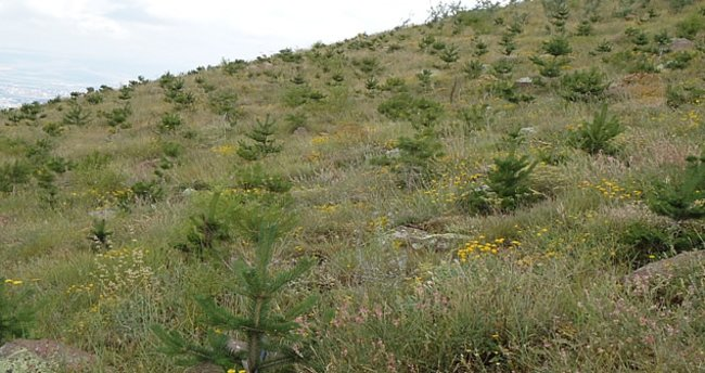 Ağaçlandırma çalışmaları nelerdir?