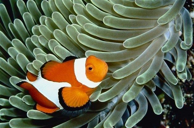 Denizler altında binbir renk