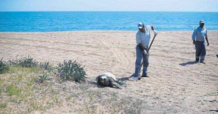 'Caretta'ya işkence yapıp öldürdüler