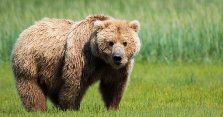 Rüyada ayı görmek ile ilgili rüya tabirleri! Rüyada ayı yavrusu görmek neye işarettir, ne anlama gelir?