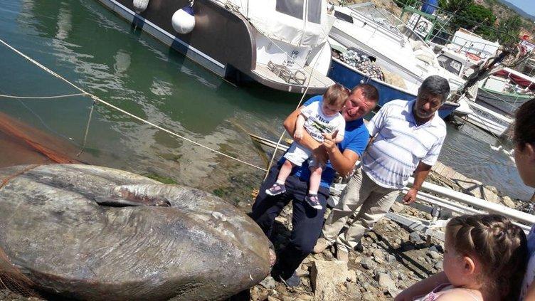 Gemlik'te dev ay balığı yakalandı