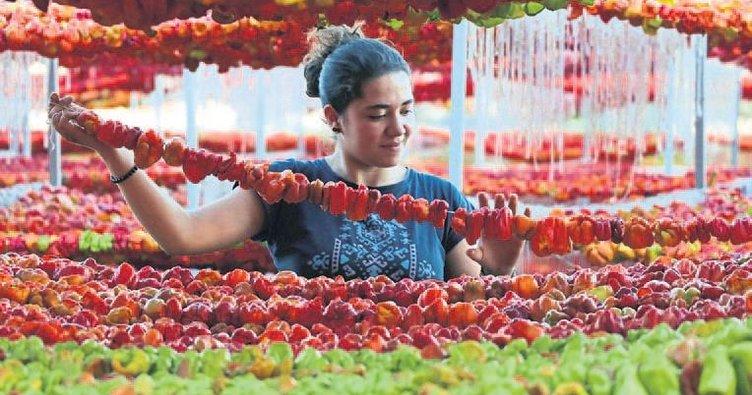Patlıcan Vadisi'den 65 ton kuru biber ihracatı