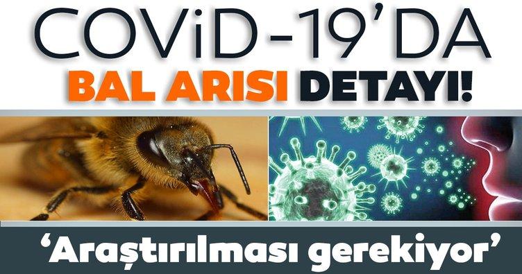 Son dakika: Koronavirüs için bal arısı detayı! 'Araştırılması gerekiyor' diyerek duyurdu