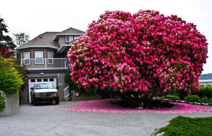 Güzellikleriyle büyüleyen ağaçlar