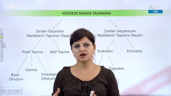 EBA TV - 9. Sınıf Biyoloji Dersi - Konu: Hücrede Madde Taşınması