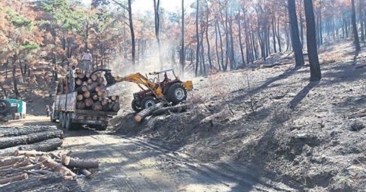 Bayındır'da yanan ormanlar yeşerecek
