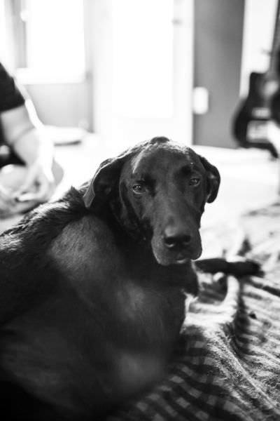 Bir köpeğin son günü