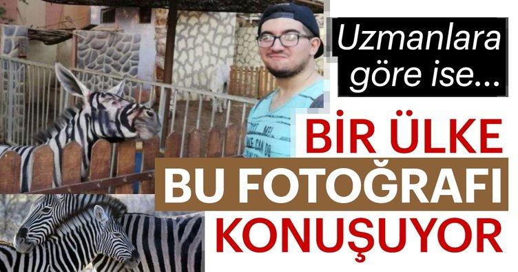 Mısır Bu Olayı Konuşuyor Zebra Görünümlü Eşek Paylaşımı Olay Oldu