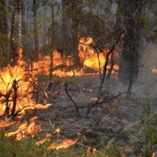 Yunanistan ın Elis bölgesinde büyük orman yangını