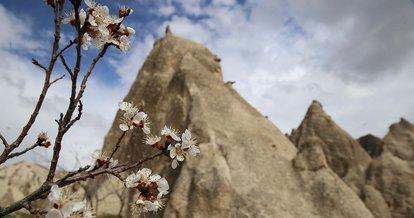 Çiçek açan kayısı ve badem ağaçları Kapadokya'ya renk kattı