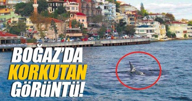 Boğaz'da köpekbalığı!