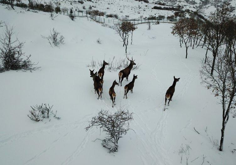 Türkiye'nin ilk fauna tanıtım alanında kış güzelliği