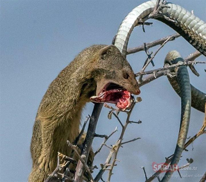 Avcı av oldu!
