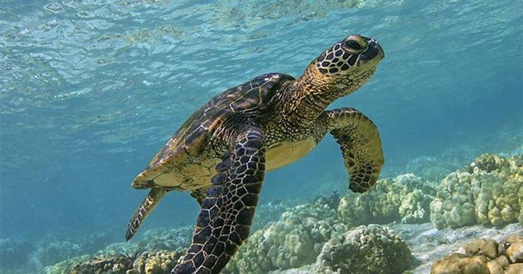 Rüyada Kaplumbağa Görmek Ne Demek? Rüyada Su ve Deniz Kaplumbağası Görmek ve Yakalamak Ne Anlama Gelir?
