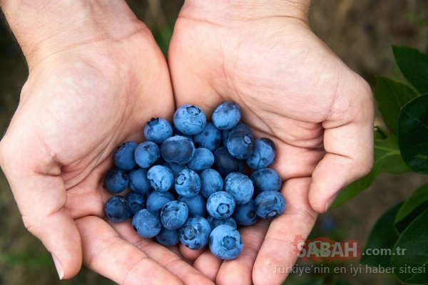 Bu besinler hafızayı canlı tutuyor!