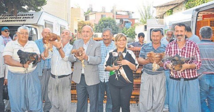 Köylüye bin 350 tavuk dağıtıldı