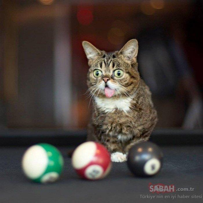 Dünyanın en ünlü kedisinin bu görüntüsünün sırrı ortaya çıktı